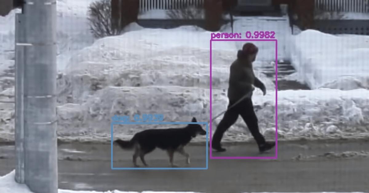 Youtuber cria dispositivo com Inteligência Artificial capaz de identificar e elogiar cachorros